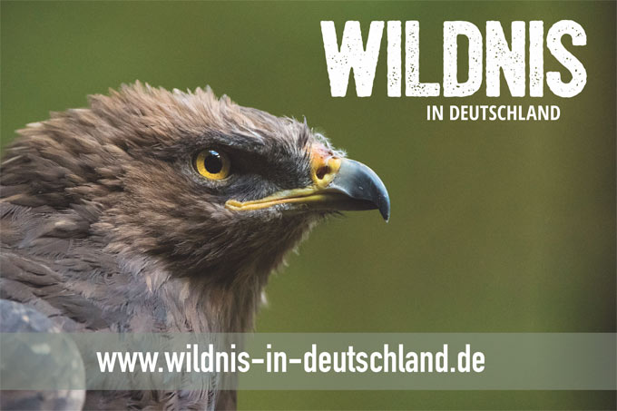 © wildnis-in-deutschland.de | ZGF | Daniel Rosengren