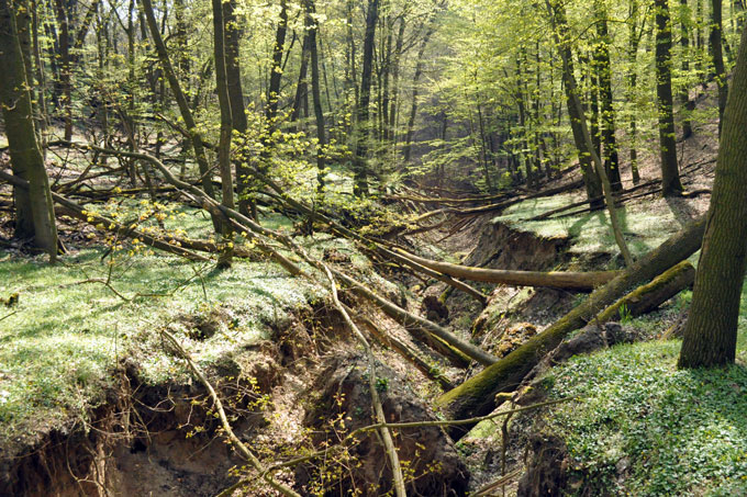 Wald kaufen sachsen